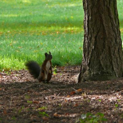 Sqirrel in the park